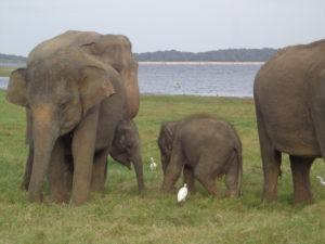 Sri Lanka vom Experten kennenlernen www.ferien.lk