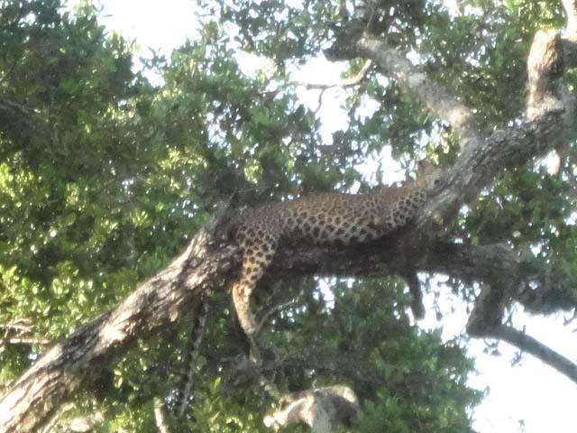 Yala National Park Ferien Sri Lanka www.ferien.lk