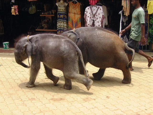 Singls Ferien Sri Lanka www.ferien.lk