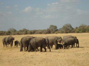 Die Wichtigsten & schönsten Orte in Sri Lanka www.ferien.lk
