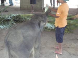 Yala Sri lanka urlaub www.ferien.lk