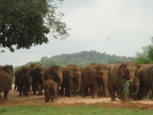National park Yala Sri lanka www.ferien.lk