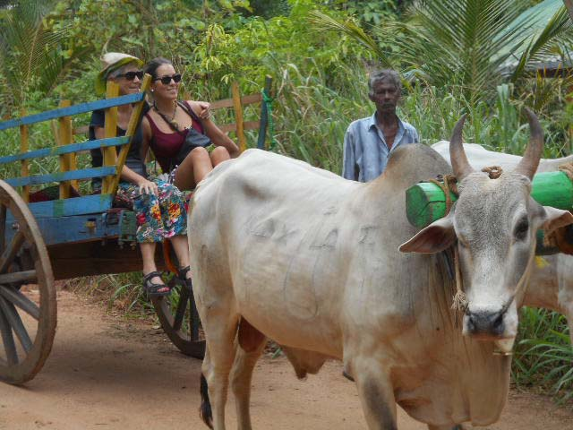 Wunderschöne Rundreise durch Sri Lanka mit Ra...