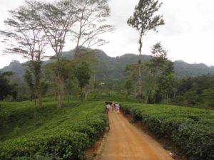 Aktivreisen-srilanka www.ferien.lk
