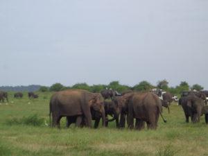 http://srilankaerlebnisreisen.com/