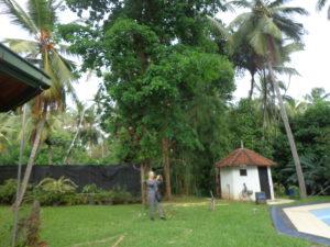 Die TOP 43 Sehenswürdigkeiten in Sri Lanka
