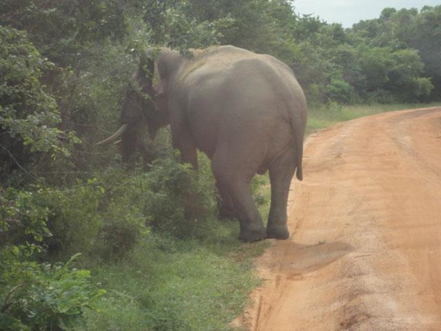 Sri Lanka www.ferien.lk  Reise nach sri Lanka,
