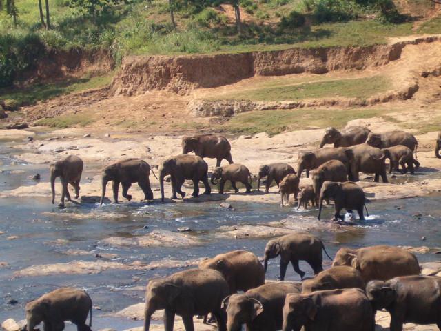 Sri Lanka Erfahren mit www.ferien.lk