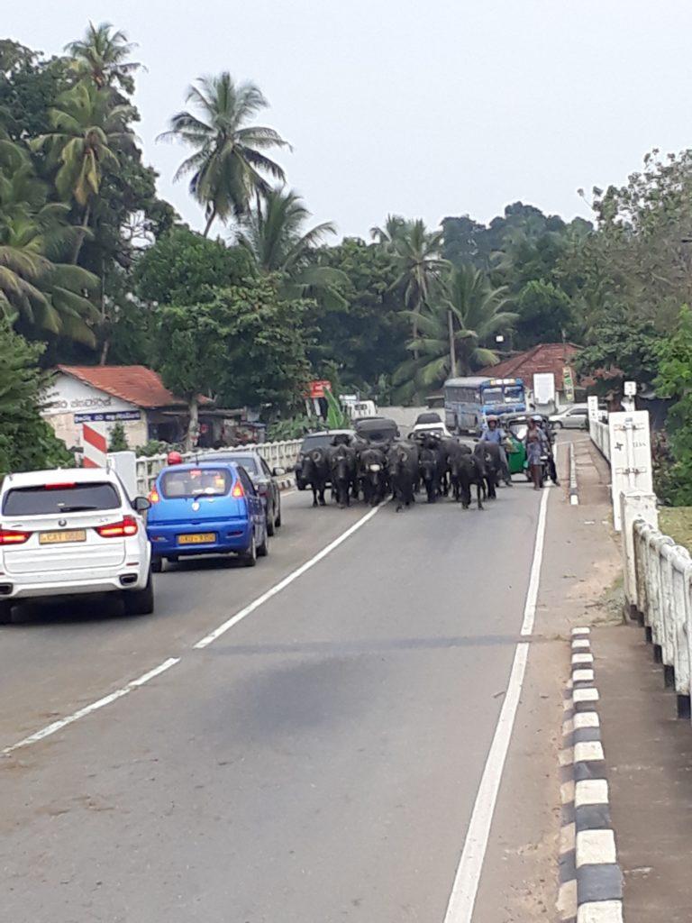 Sri Lanka Ferien www.ferien.lk