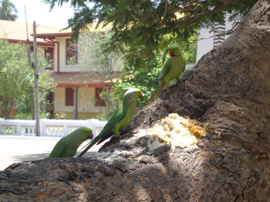 Anuradhapura   Sri Lanka Reise  Erfahrungen  über 25 jahren www.ferien.lk