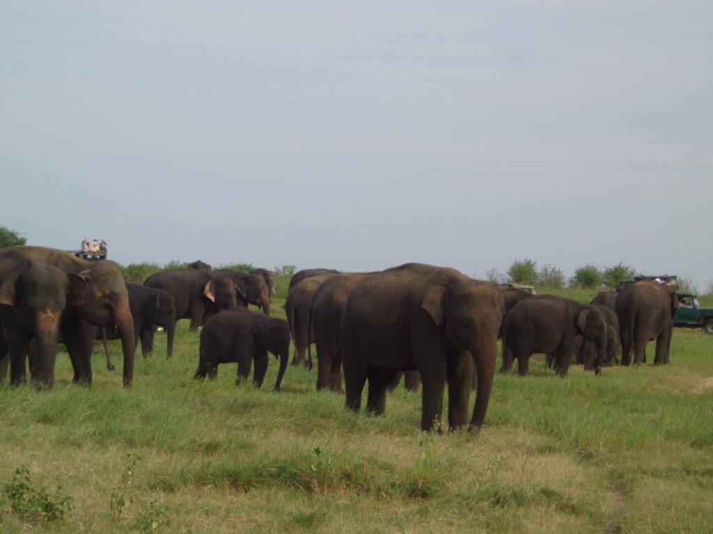 ,Minneriya Sigiriya Anuradhapura, Polonnaruwa, Aukana,Kandy,Matale,   Sri Lanka Reise  Erfahrungen  über 25 jahren www.ferien.lk