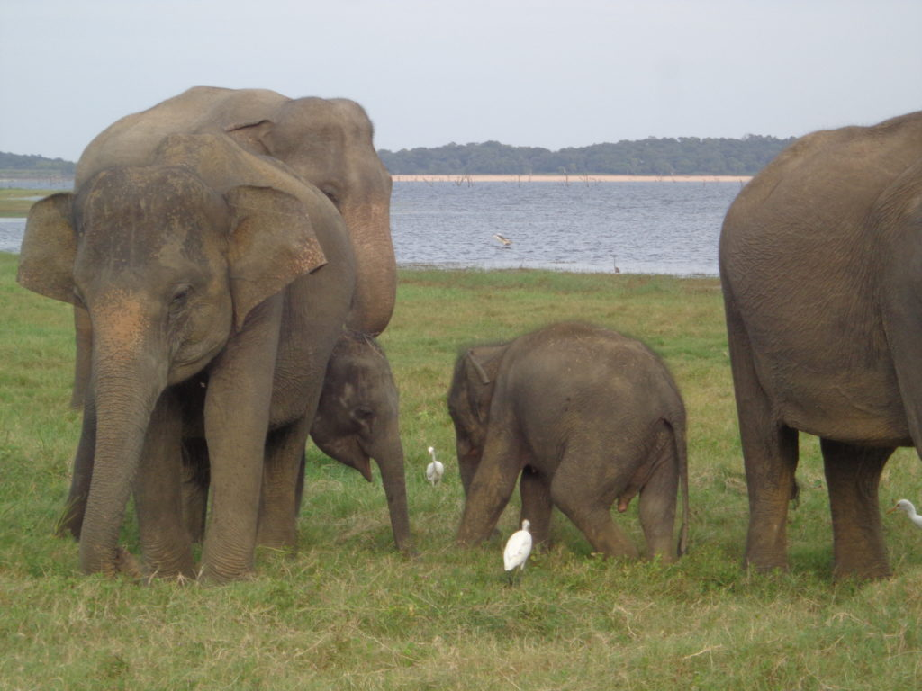 Udawalawe Nationalpark –www.ferien.lk