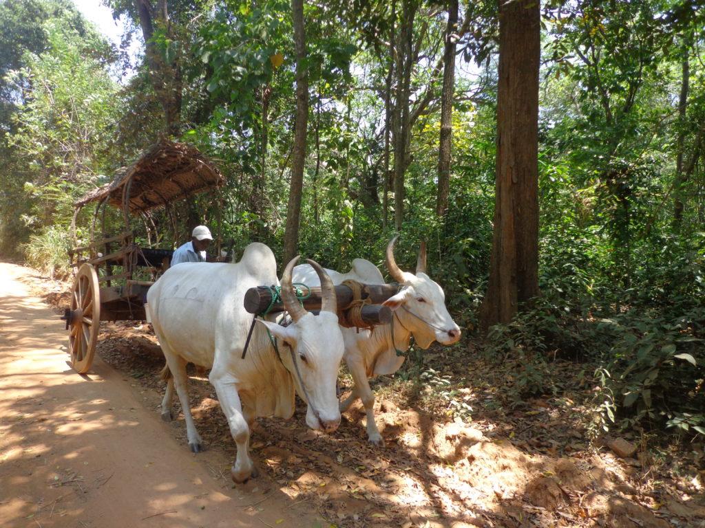 Das Reisebüro im Internet www.ferien.lk