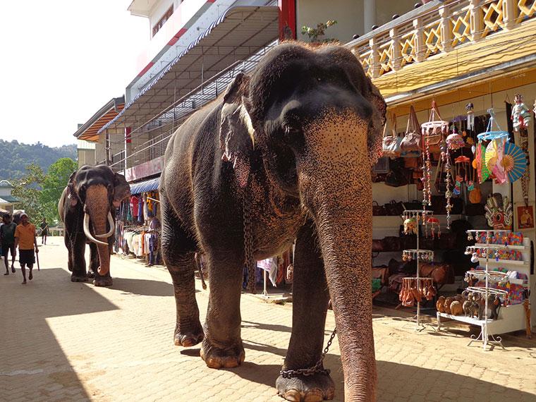 Ferien Sri Lanka: Top Hotels für Ferien in Sri Lanka www.ferien.lk