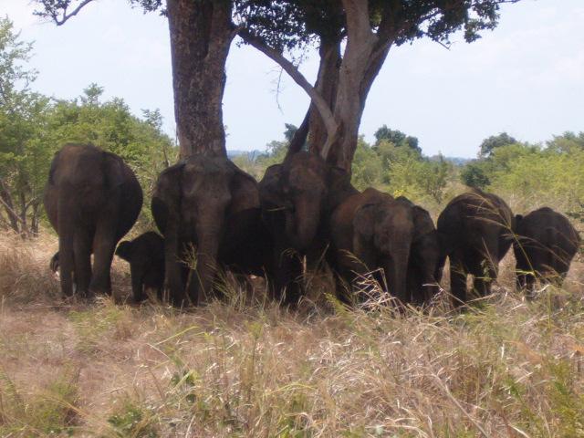 Sri Lanka itinerary Kandy,Anuradhapura www.ferien.lk